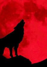 人狼。【騙される方が悪いんだよ】
