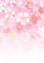 あなたと桜とわたし