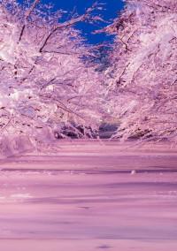 叶桜が舞い散るとき