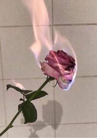 薔薇色の毎日