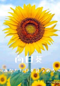 向日葵〜あなただけを見つめる〜