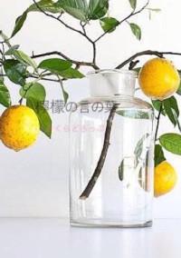 微睡み、檸檬