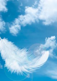 空から堕ちた白い鳥