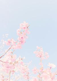 桜の木の下から始まる小さな恋💕🥂