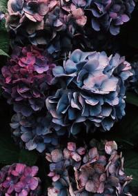 ー紫陽花ー