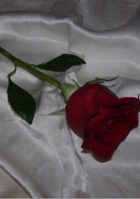 薔薇物語。
