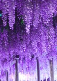 散り行く花たちに弔いを【鬼滅の刃】