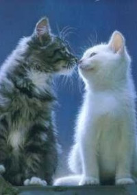【仔猫の贈り物】