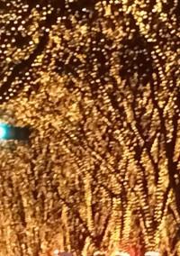 夜空に舞い落ちる雪結晶(キセキ)