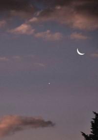 月の下を飛ぶ烏