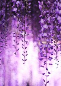 鬼滅の刃~散りゆく花と差し込む光~
