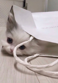 ゆき猫さん。