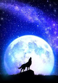 狼 の あ い つ