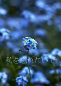 花言葉は________。