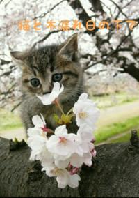 猫と木漏れ日の下で