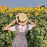 🌻向日葵🌻