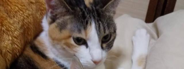 我々だ大好き自宅の猫かわいいさんの壁紙画像