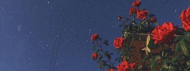 星 空 🥑さんの壁紙画像