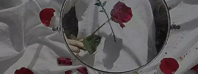 ひよさんの壁紙画像