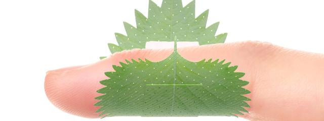 お米🌾さんの壁紙画像