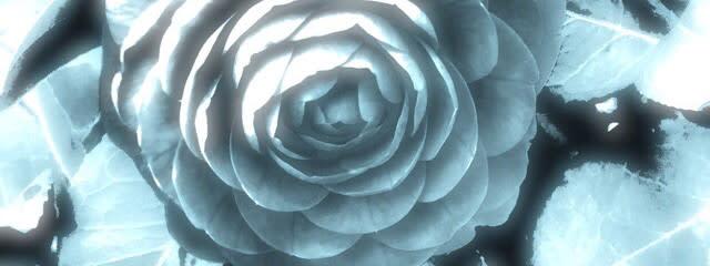 四季月 木陰さんの壁紙画像