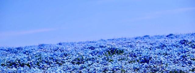 葵空❄🐼さんの壁紙画像