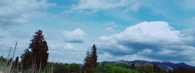°·❀桜河❀·°さんの壁紙画像