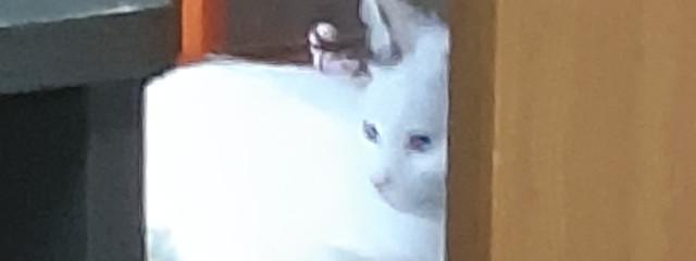 鮫雪さんの壁紙画像