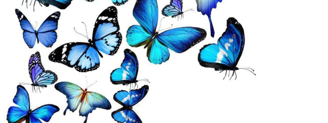 夢野虹歌さんの壁紙画像