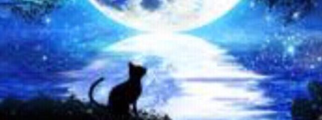 幻月 小狐さんの壁紙画像
