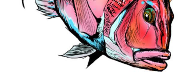 金魚 鯛さんの壁紙画像